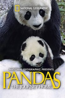 دانلود فیلم 2014 Pandas: The Journey Home